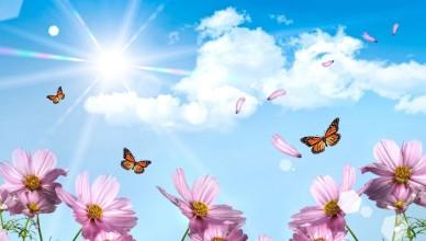 motyle-niebo-kwiaty