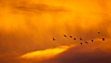 122367_zachod_slonca_chmury_ptaki