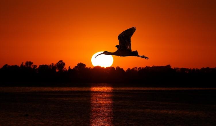 ptak-zachod-slonca-woda-lecacy