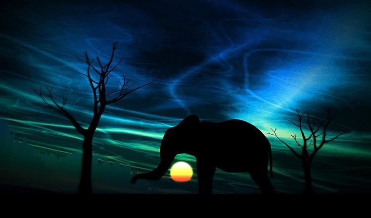 afryka-sawanna-slon-widziany-noca-w-blasku-ksiezyca