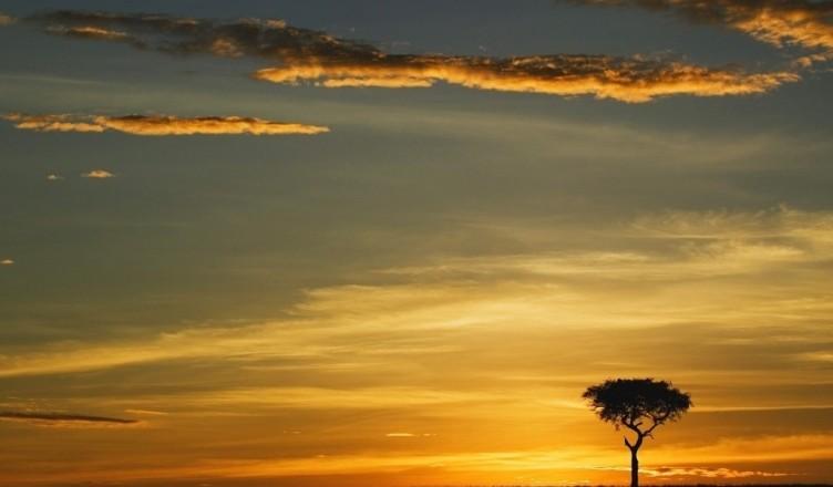 akacja-zachod-slonca-samotna